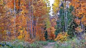 Autumn in Quebec. Canada, north America. Autumn in Quebec. Canada north America stock photo