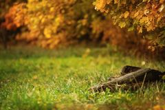 Autumn quiet forest royalty free stock photo