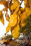 Autumn rain. Royalty Free Stock Images