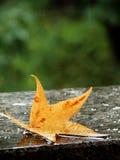 Autumn Rain. Maple leaf on the railings on rainy day Stock Images