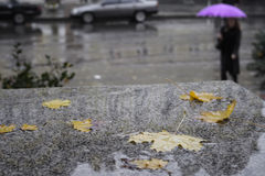 Autumn rain Royalty Free Stock Photos