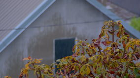 Autumn Rain on a Background of Yellow Leaves of Trees and Houses. UHD 4K 3840 x 2160p, 29,97 fps stock video footage