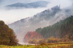 Autumn rain and fog in the mountains. Colorful autumn forest bac Stock Photos