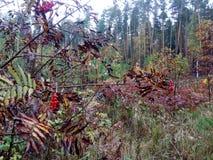 Autumn rain in the forest mountain stock image