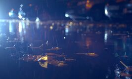 Autumn Rain In The Night City Stock Images