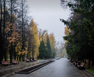 Autumn rain. Royalty Free Stock Photography