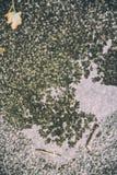 Autumn rain reflection Stock Image
