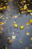 Autumn rain. Some yellow leaves in the puddle. Top view. Raindrops stock image