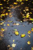 Autumn rain. Some yellow leaves in the puddle. Top view. Raindrops stock images