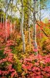 Autumn Rainbow Fotografia Stock Libera da Diritti