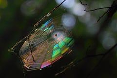 Autumn Rainbow royaltyfria bilder