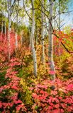Autumn Rainbow. Autumn landscape with lots of autumn colors in the Wasatch mountains of Utah Royalty Free Stock Photo