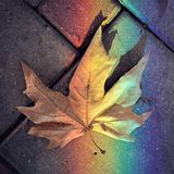 Autumn and rainbow royalty free stock photos