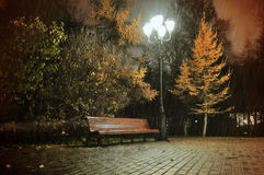 The autumn rainy night in the park Stock Image