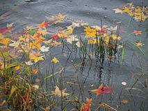 Autumn Rainy Pond Stock Photos