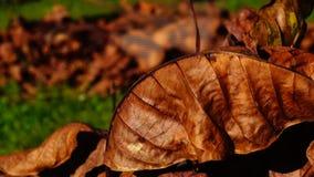 Autumn stock video