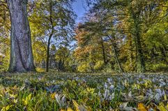 Autumn on the ramparts of Deventer. Fallen leaves in the grass of the park on the former fortifications of the city of Deventer in Overijssel, The Netherlands in Royalty Free Stock Images