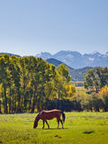 Autumn on the Ranch Royalty Free Stock Photo