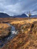 Autumn at Rannoch Moor. With a view on the skeleton tree royalty free stock photos