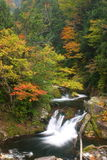 Autumn ravine Stock Photos