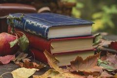 Autumn reading Stock Image