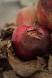 Autumn red apple of a little rotten Stock Photography