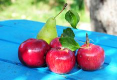 Autumn Red Apples Garden Harvest royaltyfria bilder
