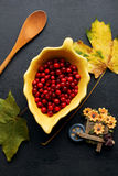 Autumn red berries. On a black background Stock Photography