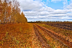 Autumn red with blue sky. Dirt road and arable land, covered with autumn leaves, red and yellow trees and grass against a blue sky Royalty Free Stock Image