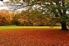 Autumn, red carpet in the park. Red leafs create a red carpet laying all over grass in a park Stock Photo