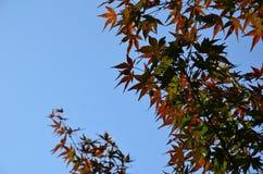 Autumn color change Japan Stock Photography