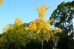 Autumn color change Japan Stock Images