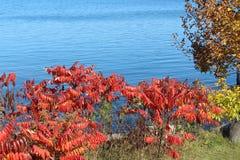 Red Sumac on shore of lake Stock Photos