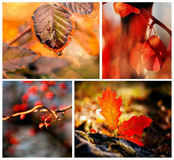 Autumn red details Royalty Free Stock Photo