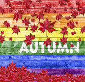 Autumn and red falling leaves isolated on LGBT flag background Royalty Free Stock Image