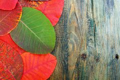 Autumn red and green leaves. Royalty Free Stock Image