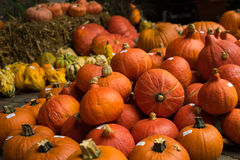 Autumn Red Kuri Pumpkins Royalty Free Stock Images