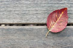 Autumn Red leaf on a wooden background, texture, background, copy space, minimalism royalty free stock images