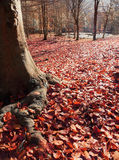 Autumn red leaves Stock Photography