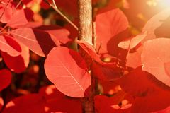 Autumn red leaves on a bright sunny day stock photo