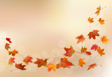 Autumn red leaves falling Stock Photography