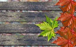 Autumn red leaves and green leaf over wooden bench with copy spa Royalty Free Stock Image