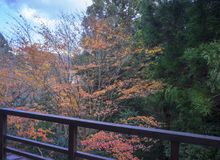 Autumn red leaves of Hakone, Japan. Seen through wooden railings on the balcony stock photography