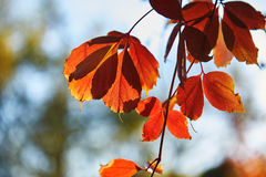 Autumn red leaves Stock Photo
