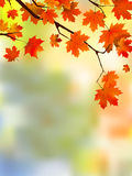 Autumn Red Leaves, Shallow Focus. Stock Photography
