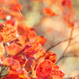Autumn red leaves Stock Image