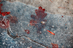 Autumn red leaves under the ice . Royalty Free Stock Images