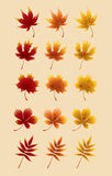 Autumn Red Maple Leaves Photo stock
