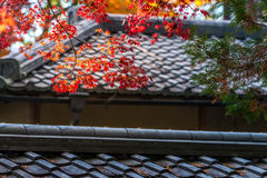 Autumn red maple leaves are cover the japan style roof Stock Photos