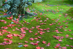 Autumn red maple leaves on green moss ground Stock Image
